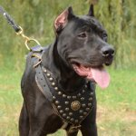 Royal Dog Harness for Pit Bull Terrier