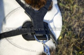 American Bulldog Harness with Luxury Spiked Design