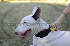 Nylon Dog Collar with Handle for Bull Terrier Control