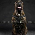 Strong Dog Harness for Cane Corso Training | Nylon Dog Harness
