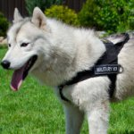 Husky Dog Harness for STOP PULLING! Bestseller!