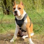 Stylish Staffordshire Bull Terrier Leather Dog Harness