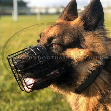 Best Dog Muzzle for Walking in Winter Frost and Summer Heat