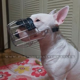 Wire Dog Muzzle for English Bull Terrier | Bull Terrier Muzzle