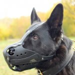 German Shepherd Muzzle Size for K9 Dog Training