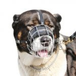 Buy the Best Caucasian Shepherd Muzzle Size and Shape