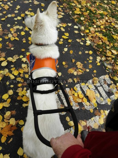 """Special Friend"" Tear-Proof Nylon Dog Harness For Assistance Dogs"