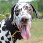 Dog Training Collar for Dalmatian and other Large Dogs