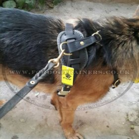 Quality Tracking Dog Harness Leather with Soft Padded Chest