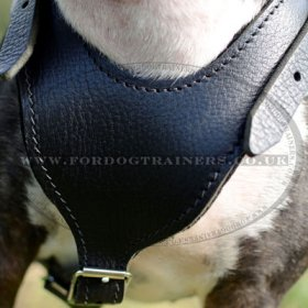 Padded English Bull Terrier Leather Dog Harness Design