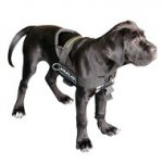 Cane Corso Mastiff Harness UK | Non Pull Dog Harness for Mastiff