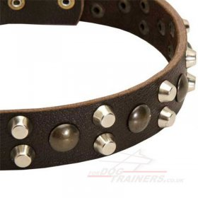 Best Collar for a Husky Dog with Brass and Nickel Rivets