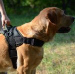 Labrador Training Dog Harness | Best Dog Harness for Labrador