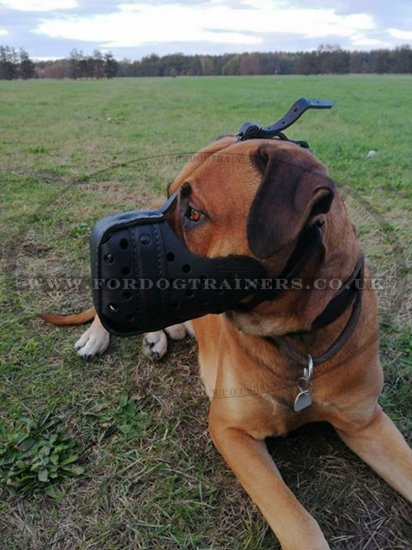 Bestseller Leather Dog Muzzle for Police Dogs | K-9 Dogs Muzzle