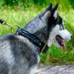 Braided 2 Ply Leather Dog Collar for Siberian Husky