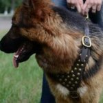 GSD Harness with Brass Studs| German Shepherd Training Equipment