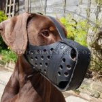 Best Doberman Leather Muzzle for Dog Training and Stop Chewing