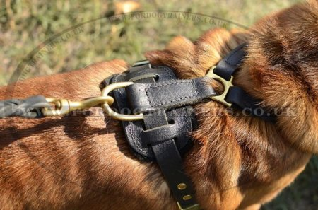 The Best Dog Harness for a Shar Pei