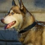 Siberian Husky Dog Collar in Nylon with Metal Belt Buckle