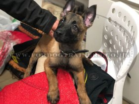Dog Bite Sleeve for Puppy Training | New Puppy Training Sleeve