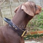 The Best Training Collar for Doberman Pinscher with Handle