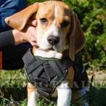 Beagle Harness with Handle for Small Dog Walking