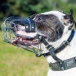 Perfect Pitbull Dog Muzzle Size with Padded Basket