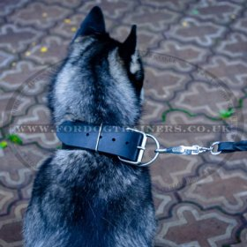 Extra Wide 2 Inch Leather Dog Collar with Buckle for Siberian Husky