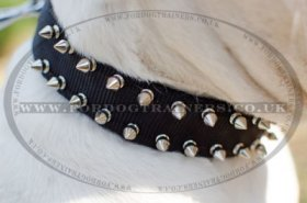"""Thorns Of Roses"" Studded Nylon Dog Collar For American Bulldog"