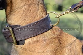 Strong 2 Ply Leather Dog Collar for Belgian Malinois with Brass Buckle