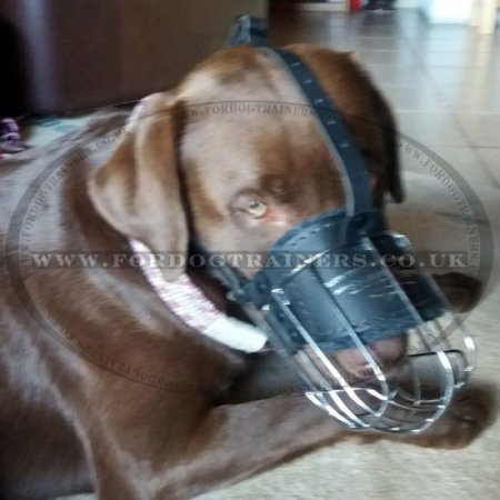 Best Dog Muzzle for Large Dogs & Small Dogs in 30 Special Sizes