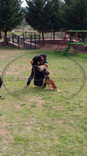 Dog Training Clothes: Nylon Apron for Dog Trainer and Helper