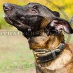 Handmade Dog Collar for Belgian Malinois | Luxury Dog Collars UK
