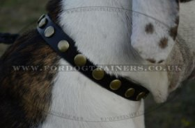 """Celestial Sphere"" Best Dog Collar For American Bulldog With Brass Studs"