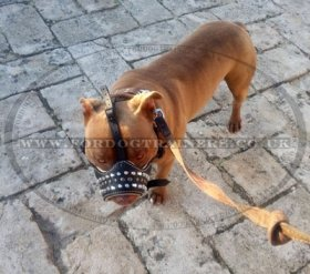 Padded Royal Nappa Leather Dog Muzzle with Studs