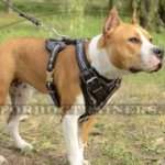 The Best Harness for a Staffordshire Bull Terrier Hand Painted Design Barbed Wire