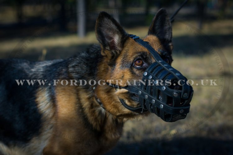 Dog Muzzle For Walking