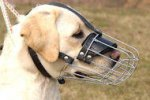 Wire Dog Muzzle for Labrador | Best Dog Muzzle for Labrador