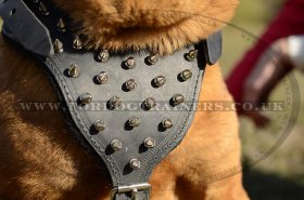 Chinese Shar Pei Leather Harness for Dogs' Comfort and Style Spiked