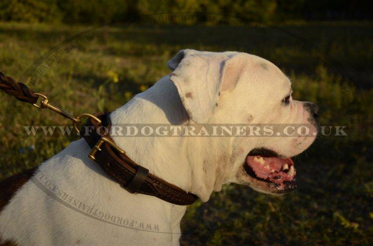 Chic Leather Dog Collar