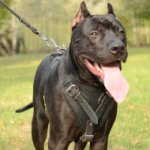 Pitbull Training Harness for K9 Dogs | Pitbull Harness, Padded