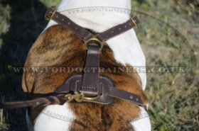 """Daily Walk"" High-Quality Leather Dog Harness For American Bulldog UK"