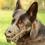 Buy German Shepherd Muzzle Size with Soft Nappa Lining