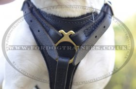 Bull Terrier Leather Dog Harness | Leather Dog Harness for Dogs