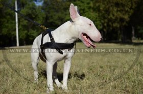 Bull Terrier Harness for Pulling, Walking and Tracking