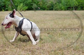 Brown Leather Harness for Dogs Studded Design Medium Large