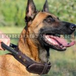 Dog Leather Collar with Handle for Belgian Malinois