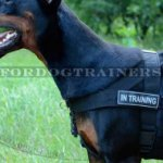 Dog Training Harness for Doberman K9