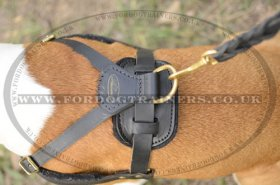 Padded Leather Dog Harness for Amstaff Training, Tracking, Walking & Sports