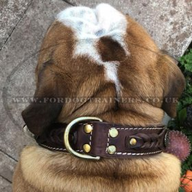 English Bulldog Collar Nappa Padded | Royal Dog Collar Design